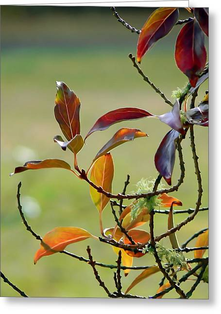Natural Autumn Greeting Card by Pamela Patch