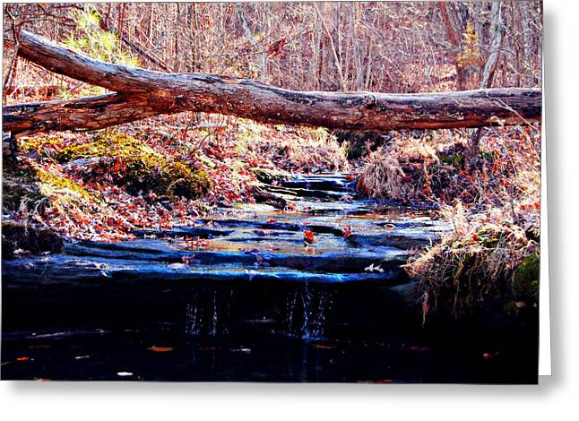 Greeting Card featuring the photograph Natural Spring Beauty  by Peggy Franz