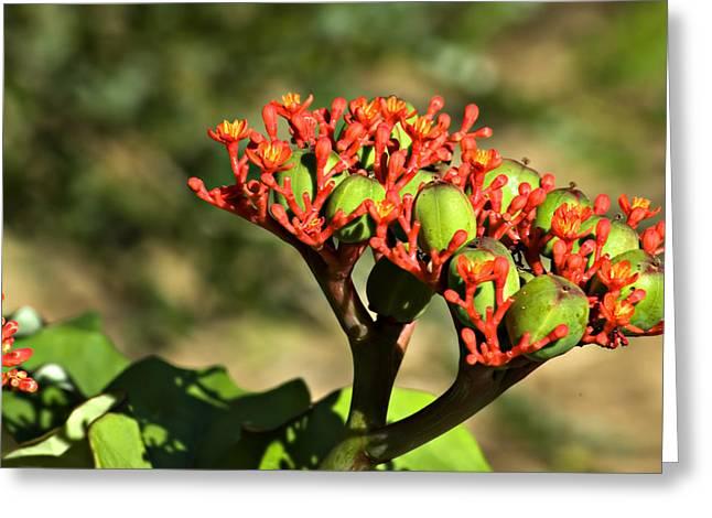 Natural Tropical Bonsai Greeting Card by Carolyn Marshall