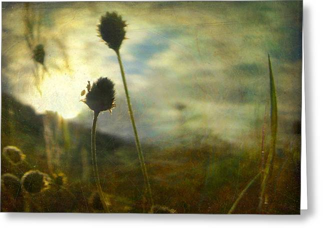 Greeting Card featuring the photograph Nature #11 by Alfredo Gonzalez