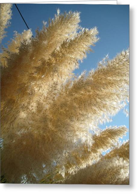 Nature As Tangible Sunlight Greeting Card