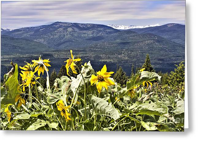 Nature Dance Greeting Card by Janie Johnson