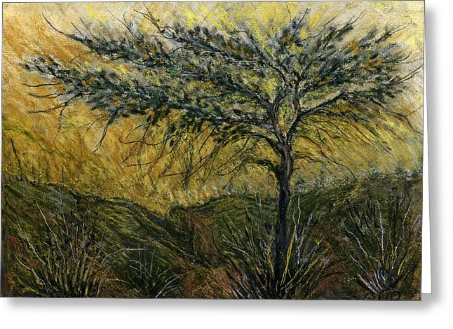 Nature Landscape Green Thorns Acacia Tree Flowers Sunset In Yellow Clouds Sky  Greeting Card