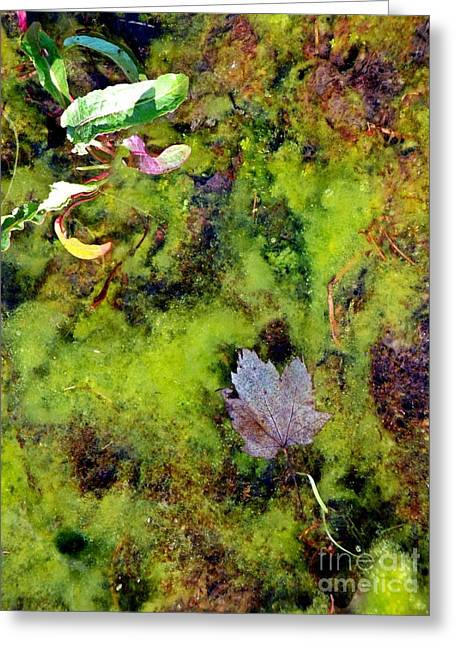 Nature's Absract Greeting Card by Christian Mattison