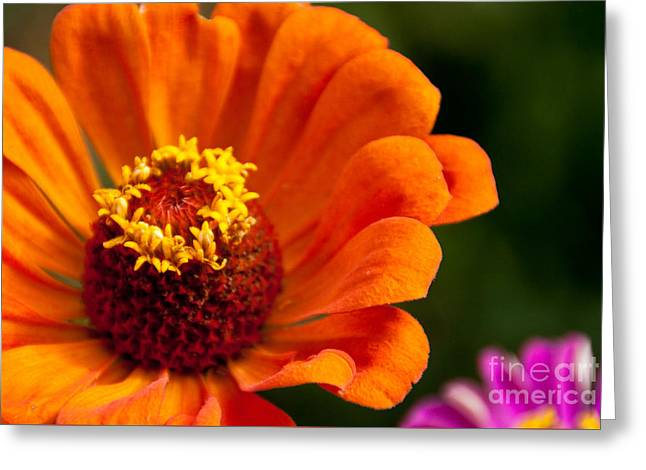 Natures Color  Greeting Card by Dana Kern