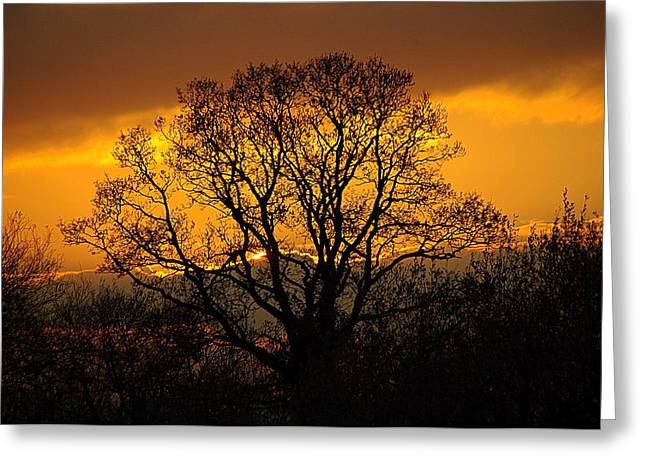 Nature's Gold Greeting Card by Cat Shatwell