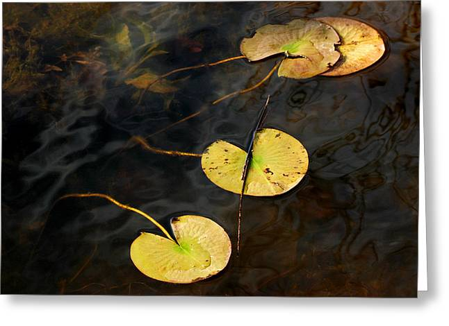 Natures Lily Pad Garden Greeting Card