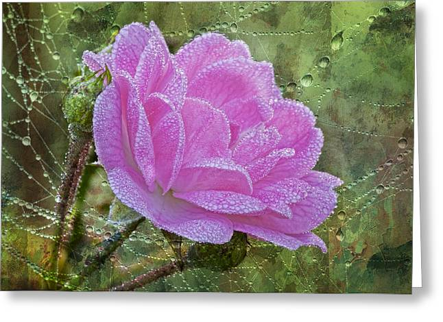 Nature's Pearls Greeting Card
