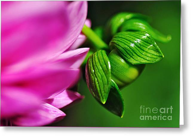 Nature's Perfection Greeting Card by Kaye Menner