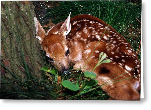 Nature's Precious Creation Greeting Card by Skip Willits