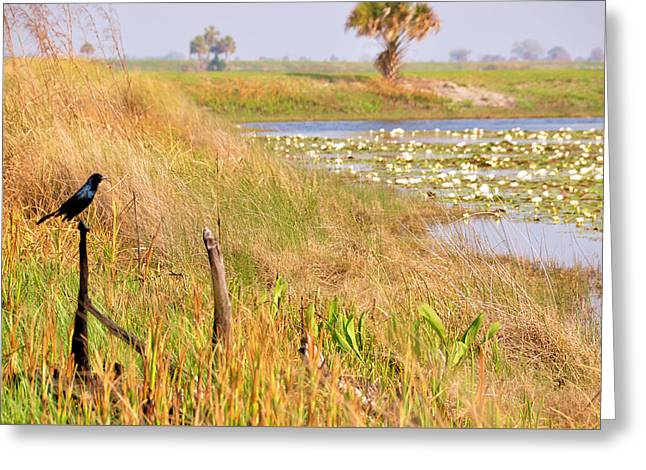 Near And Far Greeting Card by Jan Amiss Photography