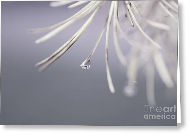 Neigerelle 02a Greeting Card by Variance Collections