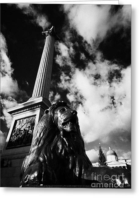 nelsons column and lion inTrafalgar Square London England UK United kingdom Greeting Card by Joe Fox
