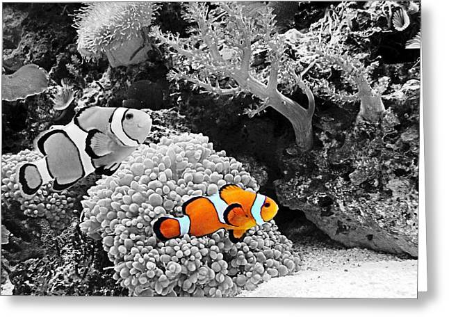 Nemo At Home Greeting Card