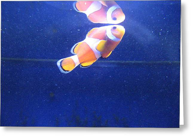 Nemo Greeting Card by Davor Sintic
