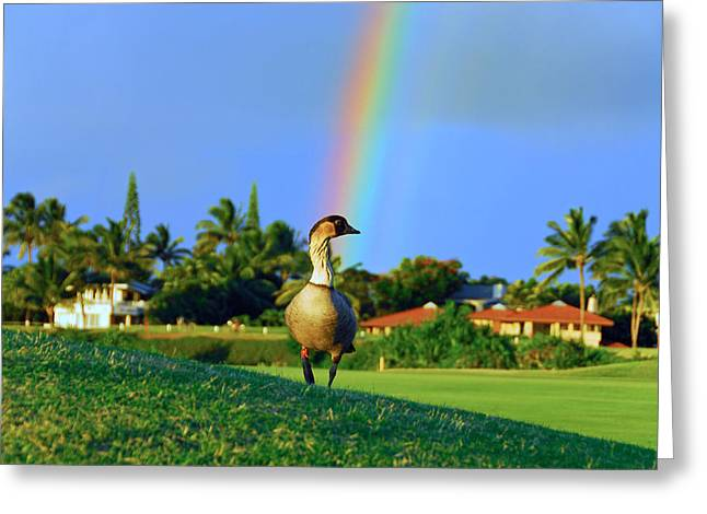 Greeting Card featuring the photograph Nene At The End Of The Rainbow by Lynn Bauer