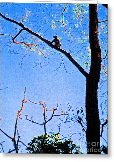 Nepal Monkey Watching Greeting Card by First Star Art