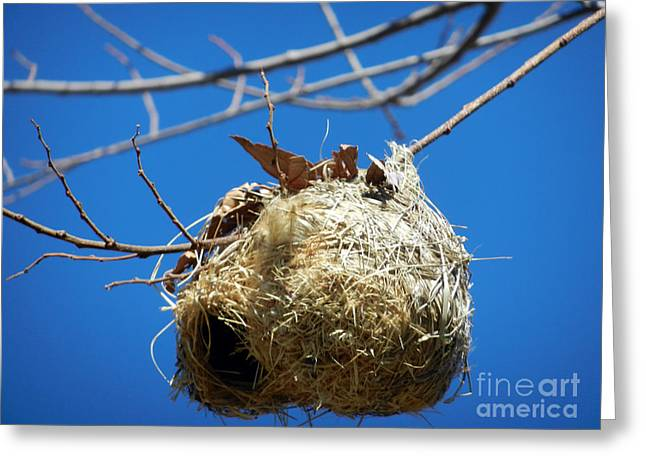 Greeting Card featuring the photograph Nest For Rent by Alexandra Jordankova