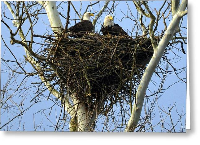 Greeting Card featuring the photograph Nesting by Brian Stevens