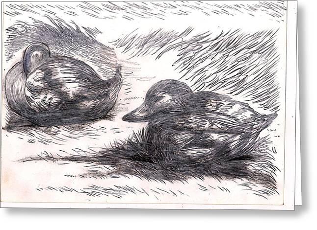 Nesting Mallards Greeting Card