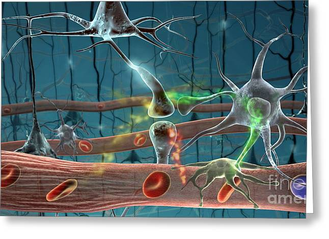 Neurons Greeting Card by Science Source