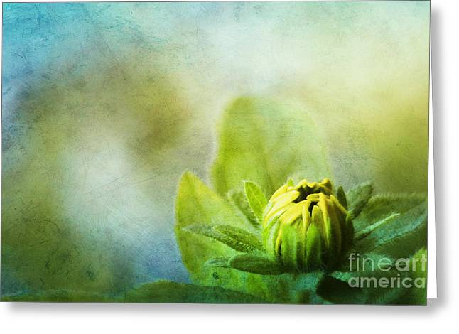 New Beginnings Greeting Card by Darren Fisher
