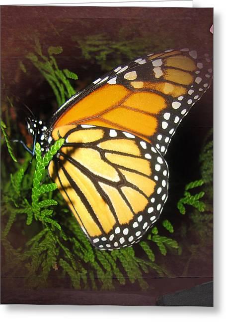 New Born Butterfly Greeting Card by Debra     Vatalaro