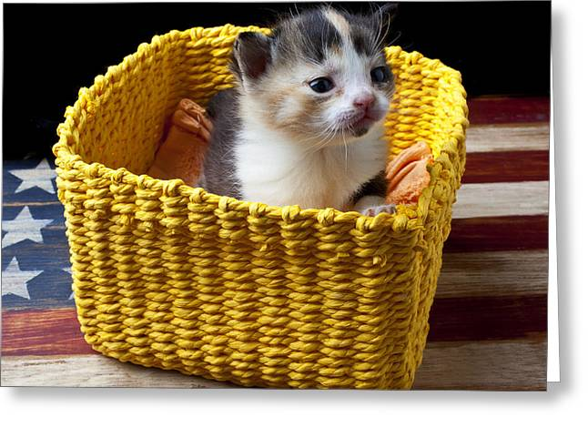 New Born Kitten Greeting Card by Garry Gay
