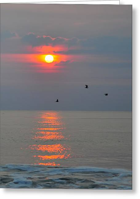 New Day Greeting Card by Tazz Anderson