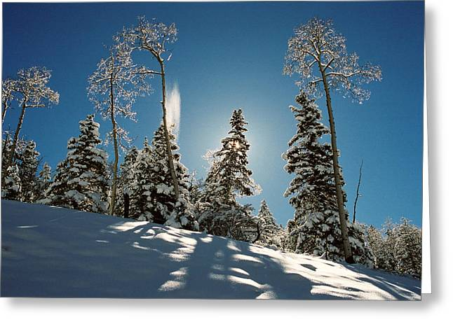 New Fallen Snow Greeting Card