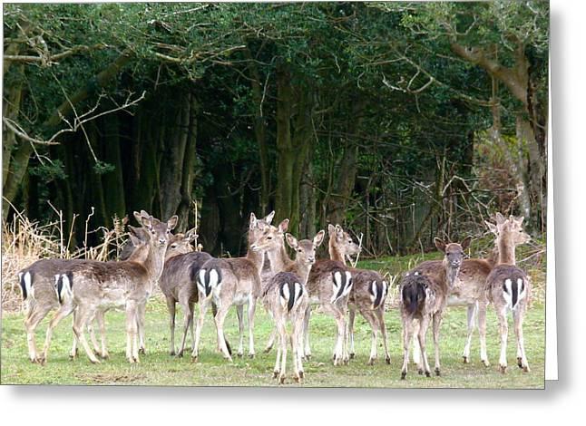 New Forest Deer Greeting Card by Karen Grist
