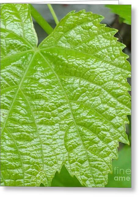 New Grape Leaf Macro Greeting Card by Padre Art