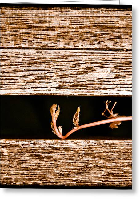 Albuquerque, New Mexico - New Growth Greeting Card
