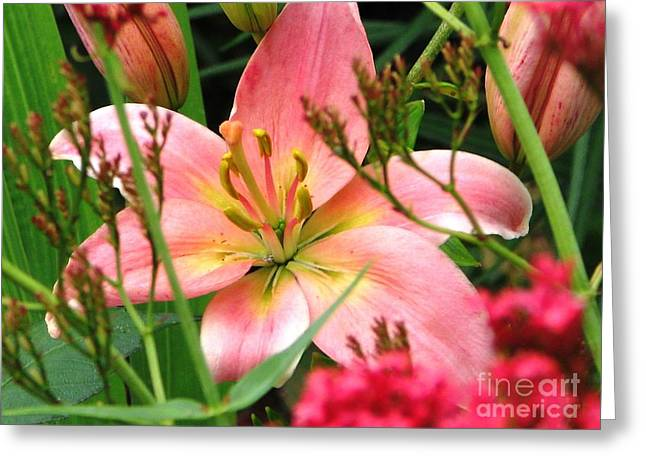 New Lily 2012 Greeting Card