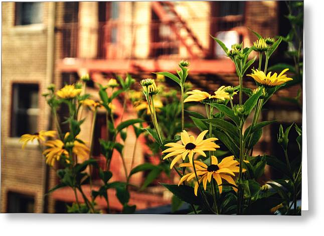 New York City Flowers Along The High Line Park Greeting Card by Vivienne Gucwa