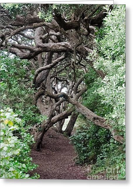 New Zealand Rainfores With Pohutukawa Trees Greeting Card