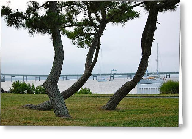 Newport Ri Evergreen Characters Greeting Card