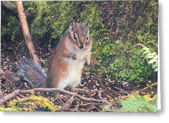 Newport Squirrel Greeting Card