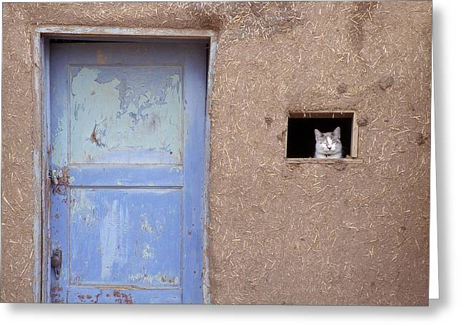 Next To A Blue Door, A Cat Peers Greeting Card