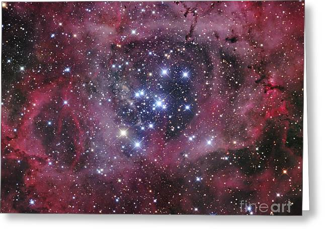 Ngc 2244, The Open Cluster Greeting Card by Robert Gendler