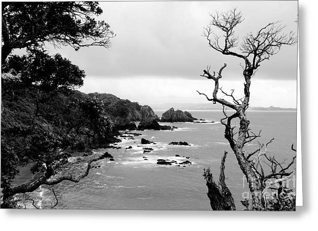 Ngunguru Bay New Zealand Greeting Card