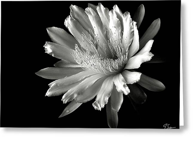 Night Blooming Cereus In Black And White Greeting Card