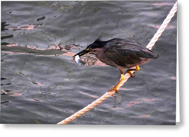 Night Fishing 2 Greeting Card