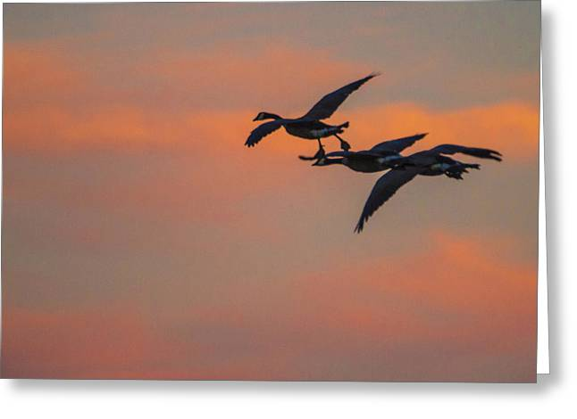 Night Flight Greeting Card by Joshua Dwyer