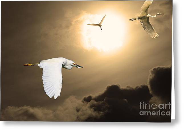 Night Of The White Egrets . Partial Sepia Greeting Card by Wingsdomain Art and Photography