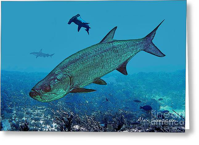 Tarpon Drawings Greeting Cards - Night Prowlers Greeting Card by Alex Suescun