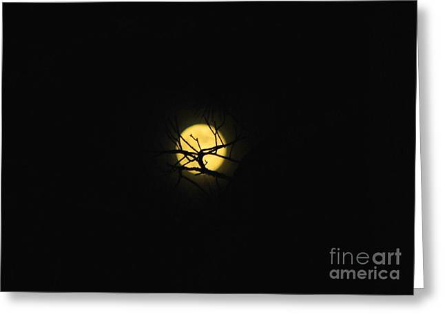 Night Sky In The Woods Greeting Card by Monica Poole