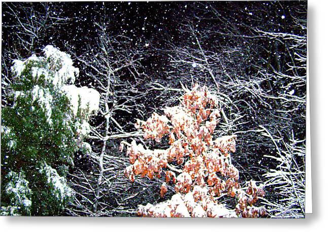 Night Snow 2 Greeting Card by Sandi OReilly