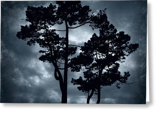 Night Tree Greeting Card by Svetlana Sewell
