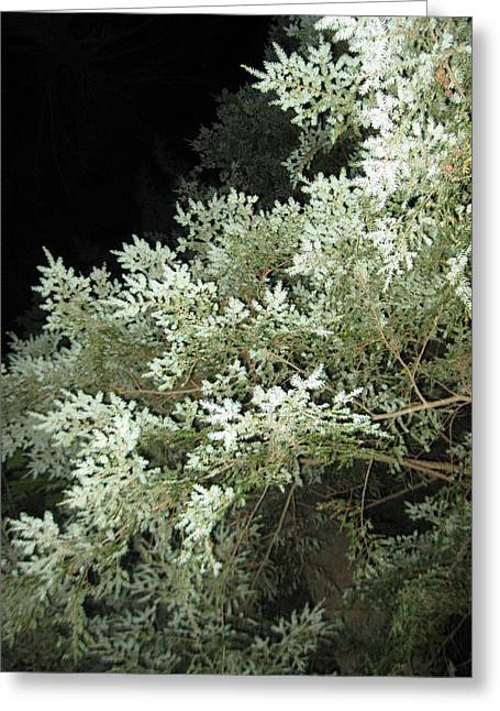 Night Trees Greeting Card by Lali Partsvania